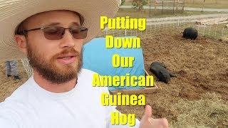The Ethical Decision (putting down our American Guinea Hog sow)