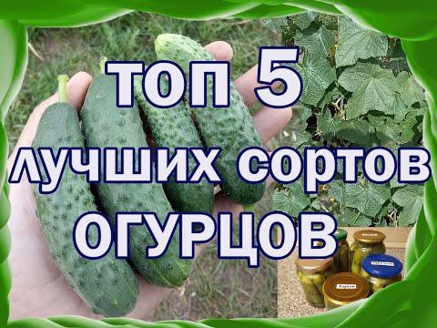 Вопрос: Какие сорта огурцов наиболее приспособлены к нашему климату?