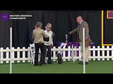 Masters Obedience Championship | WKC | Part 1