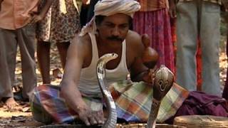 Hissing sound of Cobra, Snake Charmer