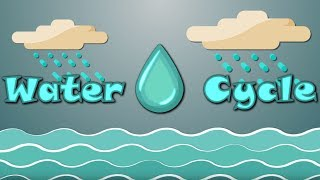 Water Cycle Facts For Kids Water Cycle Process Youtube