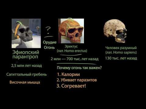 Первая миграция людей на Земле (часть2)   Хронология эволюции человека  
