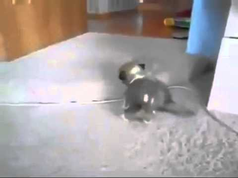 Little Kitten vs Little Puppy :) Really Funny Fight
