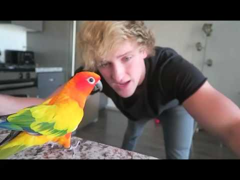 Funny Moments From Logan Paul Vlogs