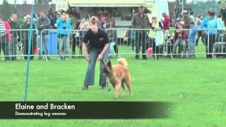Lincs Dog Training Display Highlights