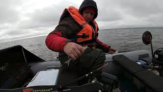 окунь на отводной поводок Кубенское озеро бонусом грибалка зачетная рыбалка