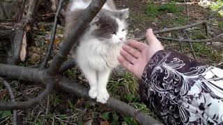 VLOG 2:Посев семян помидор в тепличку.Ласковые соседские коты.Посев семян овощей.Распилка черешни.