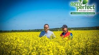 AGRO-PERFECT Bydgoszcz Krystian Walloschek Rzepak