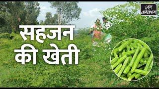 Drumstick-सहजन की फायदेमंद खेती    Drumstick Farming in India