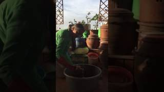 Home composting with Vani Murthy