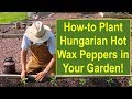 Tips and Ideas on How-to Plant Hungarian Hot Wax Peppers in Your Vegetable Garden