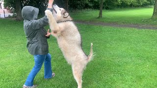 Will My Giant Dogs Recognise Grandma In Public And Disguised?? (SO FUNNY!!) (PRANK)