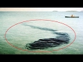 Sea Serpents And Underwater Cryptids