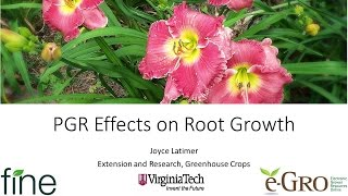 PGR Effects on Root Growth