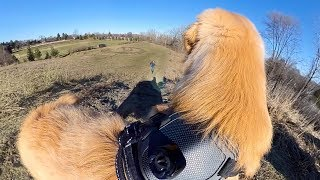 Golden Retriever Puppy Running 360° Camera