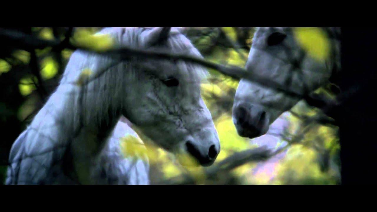 Die Legende Der Weißen Pferde Stream