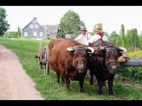 The Accidental Farmer