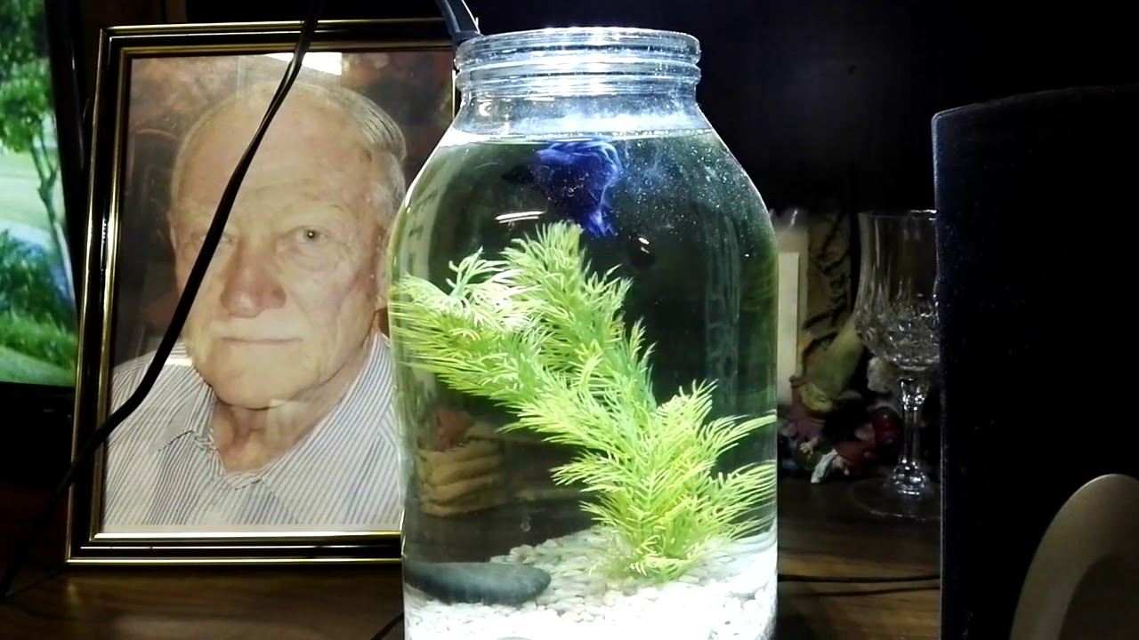 Betta Fish Tank Ideas
