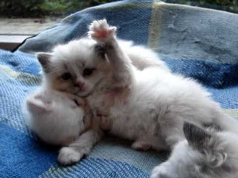 Yawning and stretching kittens - YouTube Yawning Kitten