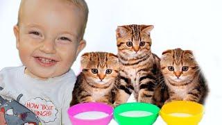 Funny Kids play with Kittens تلعب مع القطط الصغيرة كيوت