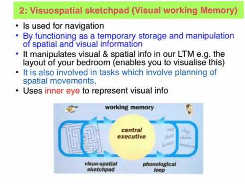 What Is Working Memory >> Working Memory Vce Unit 3 Psychology