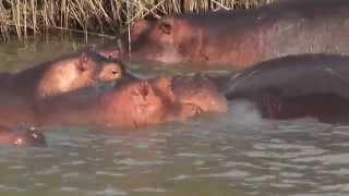 Niezwykly Swiat - RPA - iSimangaliso Wetland Park