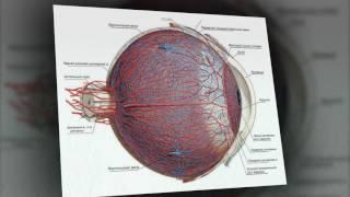 Зрение/ Важность кровообращения для здоровья глаз