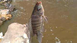 Pescando en la cascada con caña pesca con chuy