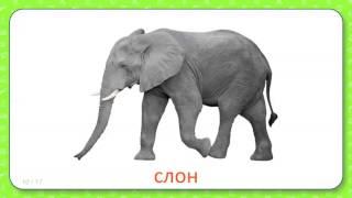 Развивающие карточки Домана для детей Животные теплых стран