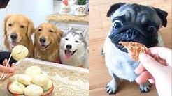 Funny Dog Reaction to Dog Food - Funny Dog Food Reaction Compilation