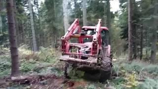 Leśny Marek