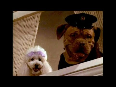 "DVD-R Heaven: ""Tequila and Bonetti: Wonderdog"""