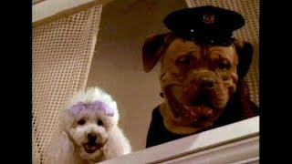 DVD-R Heaven: 'Tequila and Bonetti: Wonderdog'