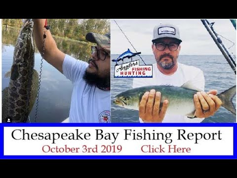 Chesapeake Bay Fishing Report- October 3rd 2019