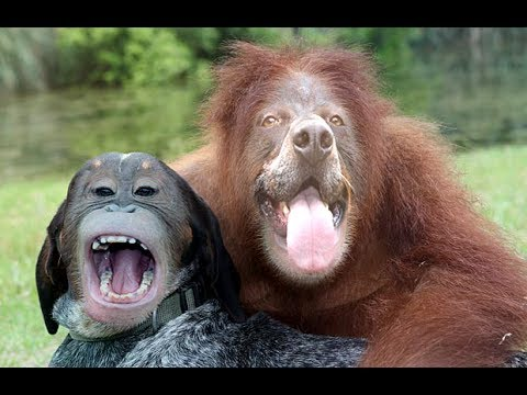 scary animal face swaps   youtube