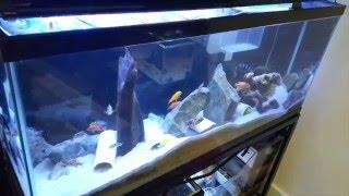 ebay 48 led aquarium light review cll petsupplies