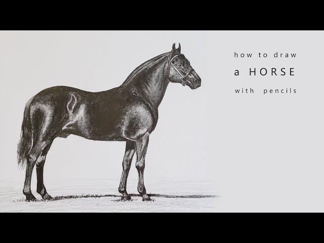 how to draw a horse как нарисовать лошадь