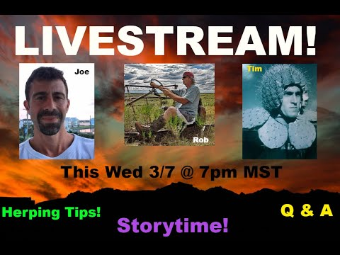 LIVESTREAM with two top herpers! Tips, Tricks, Stories and GPS coordinates??