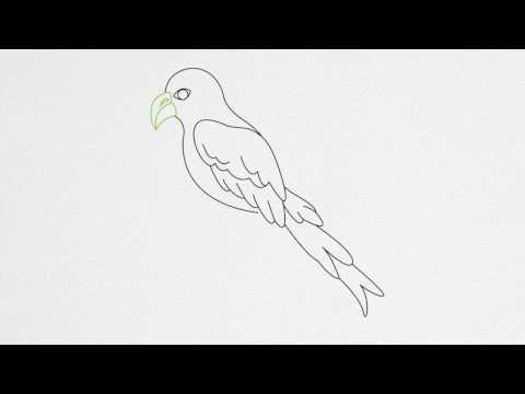 How to draw a PARROT step by step