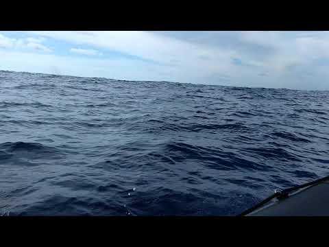Madeira Whale Watching 01, with Lobosonda Tours