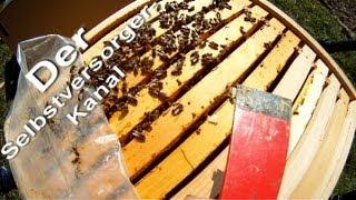 Honigbienen kurz vor dem Start ins Honigjahr