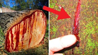 5 Scariest & Most Mysterious Trees in the World...