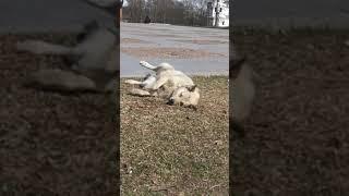Собака нежится на весеннем солнышке.
