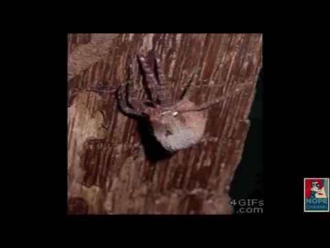 Download Youtube: Scary Nope Compilation: Spiders