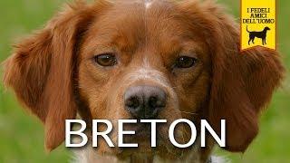 EPAGNEUL BRETON