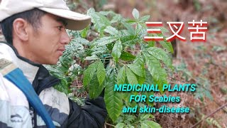 MEDICINAL PLANTS FOR Scabies and skin-disease