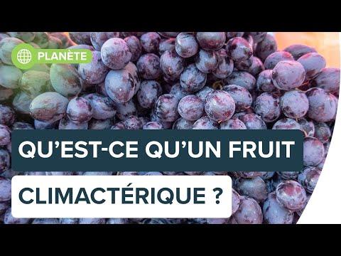 Pourquoi certains fruits mûrissent et d�€�autres pas ? | Futura