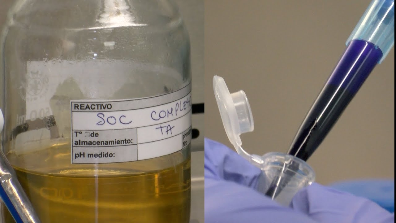 Investigadores que neutralizaron el virus del Covid con anticuerpos de llamas analizan su producción