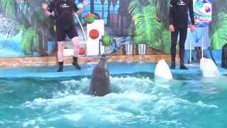 Открытие Дельфинария
