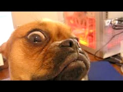 animals our best and funniest little furry friends  funny animal compilation